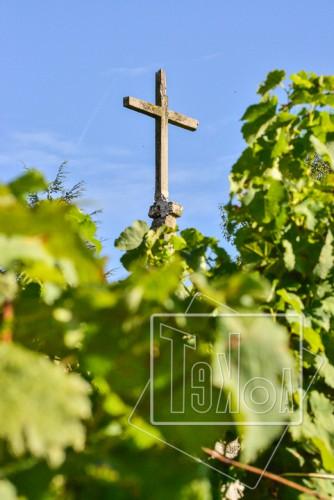 tekoaphotos,croix,vignes,condrieu